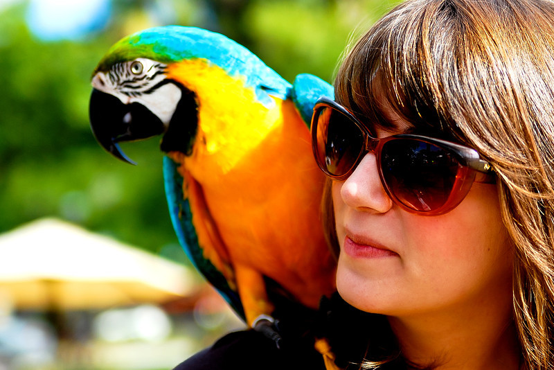 Parrot and Owner
